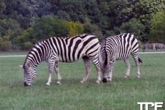 Knuthenborg-Safaripark-(20)