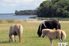 Knuthenborg-Safaripark-(43)