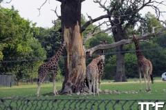Knuthenborg-Safaripark-(5)