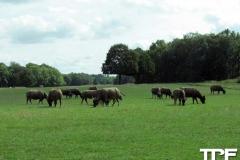 Knuthenborg-Safaripark-(51)