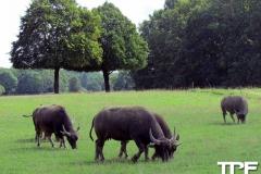 Knuthenborg-Safaripark-(53)