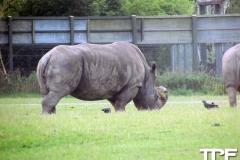 Knuthenborg-Safaripark-(59)