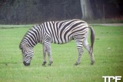 Knuthenborg-Safaripark-(60)