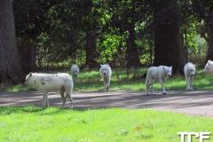 Knuthenborg-Safaripark-(63)