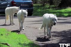 Knuthenborg-Safaripark-(65)