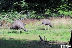 Knuthenborg-Safaripark-(90)