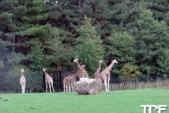 Knuthenborg-Safaripark-(97)