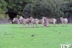 Knuthenborg-Safaripark-(99)