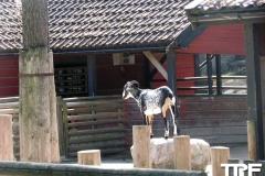 Kolmården-(10)
