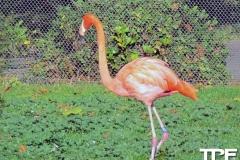 keulen-zoo-(10)