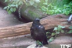keulen-zoo-(11)