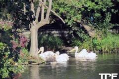 keulen-zoo-(13)