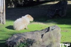 keulen-zoo-(15)
