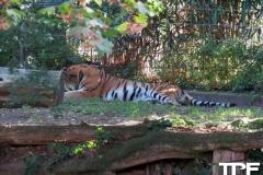 keulen-zoo-(18)