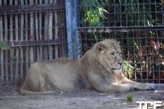 keulen-zoo-(19)