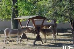 keulen-zoo-(2)