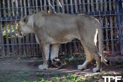 keulen-zoo-(20)