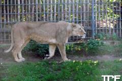 keulen-zoo-(21)