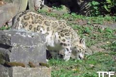 keulen-zoo-(22)