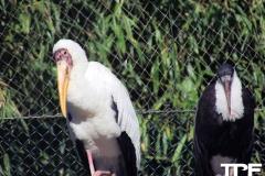 keulen-zoo-(25)