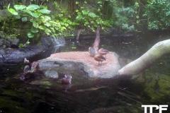 keulen-zoo-(26)