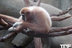 keulen-zoo-(27)
