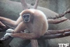 keulen-zoo-(28)