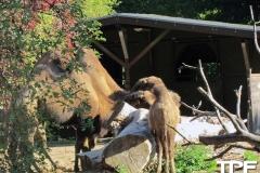 keulen-zoo-(3)