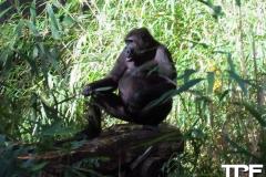 keulen-zoo-(32)