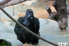 keulen-zoo-(34)