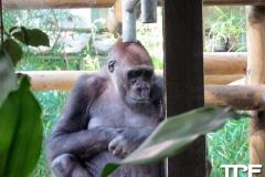 keulen-zoo-(35)