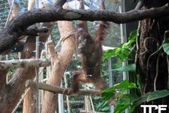 keulen-zoo-(36)