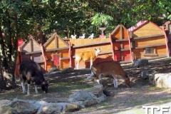 keulen-zoo-(37)
