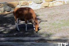keulen-zoo-(38)