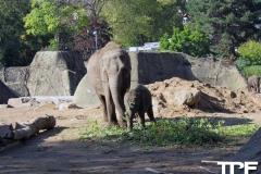 keulen-zoo-(39)