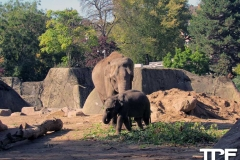 keulen-zoo-(40)