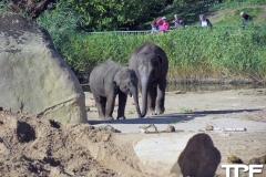 keulen-zoo-(41)