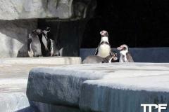 keulen-zoo-(46)