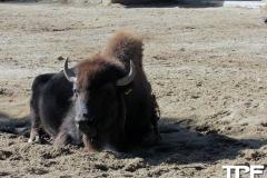 keulen-zoo-(47)