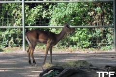 keulen-zoo-(49)