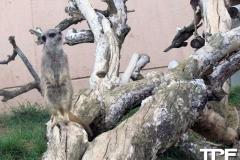 keulen-zoo-(5)