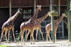 keulen-zoo-(50)