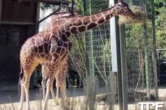 keulen-zoo-(51)