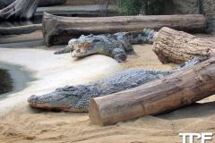 keulen-zoo-(60)