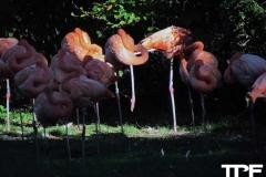 keulen-zoo-(8)