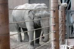 Kopenhagen-Zoo-(27)