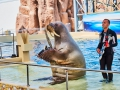 dolphin-show_2