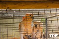 Tropische-vogels-2