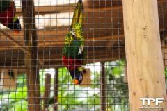 Tropische-vogels-4