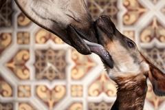 okapi-ubundu-zoo-antwerpen-jonas-verhulst-15022019-1